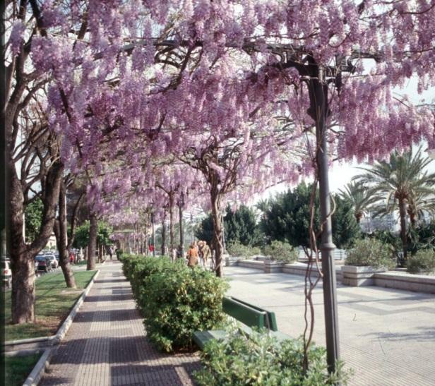 paseo-alcalde-marques-del-contadero_6d