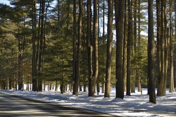 pines-avenue