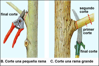 rama-cortefig6bc
