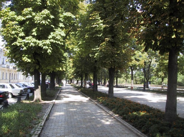 street-with-trees