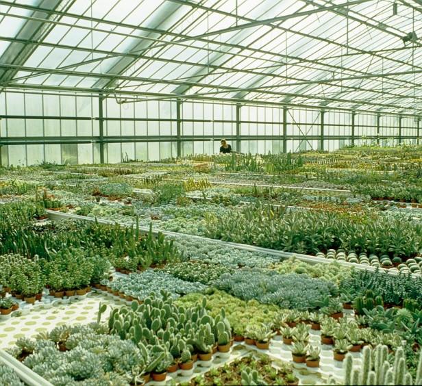 torsanlorenzo-cactus
