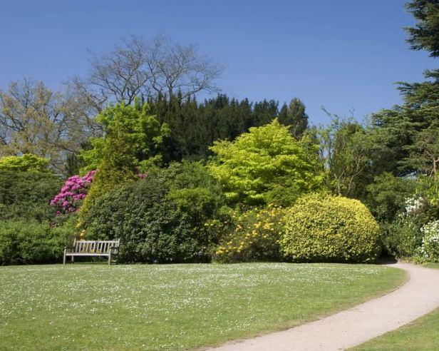 trees-shrubs-newstead