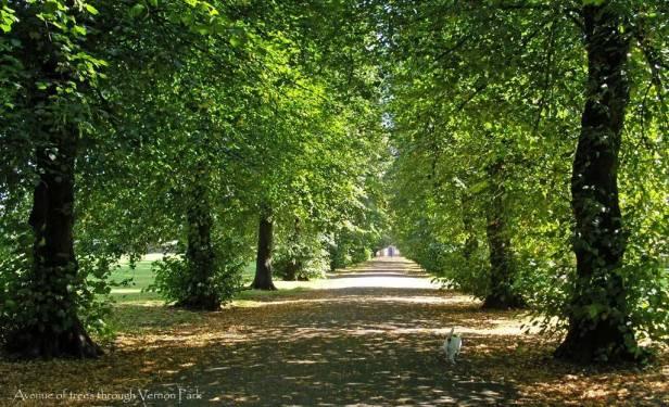 vernon-park-avenue-of-trees