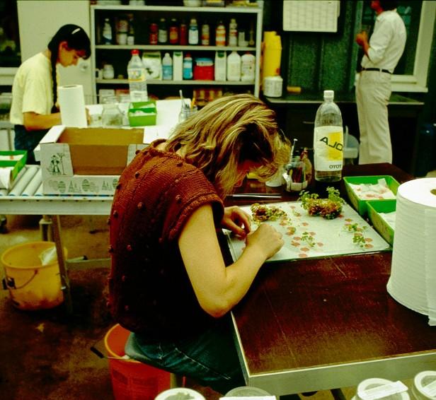 viveros-cultivo-in-vitro-plandosat-orleans