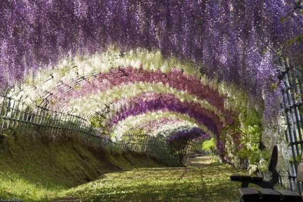 ashikaga-flower-park-102