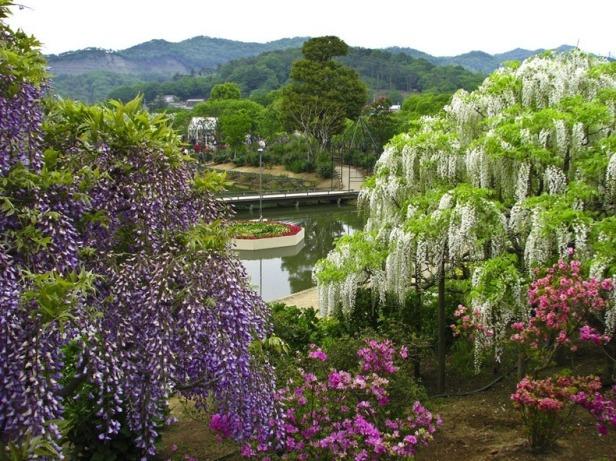 ashikaga-flower-park-112