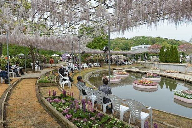 ashikaga-flower-park-d