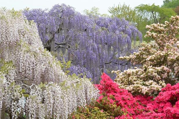 ashikaga-flower-park-f