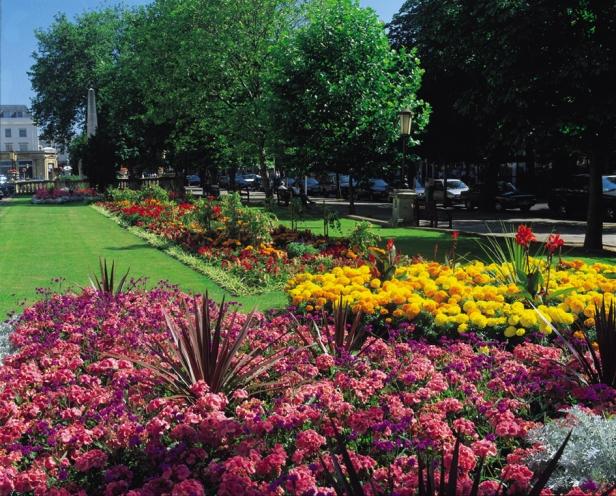 cheltenham-05flora_hires-2