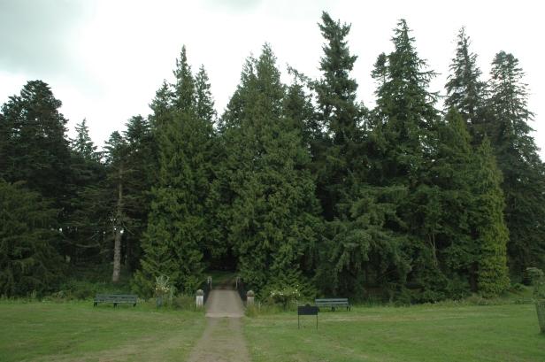glamis-castle-pinetum-6