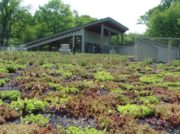 green-roof-may