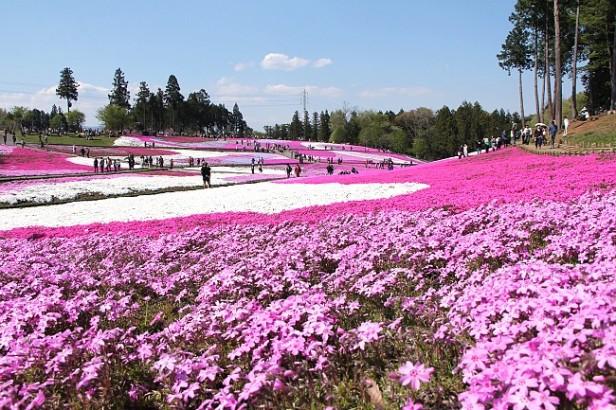 japon-chichibu-hitsujiyama-park