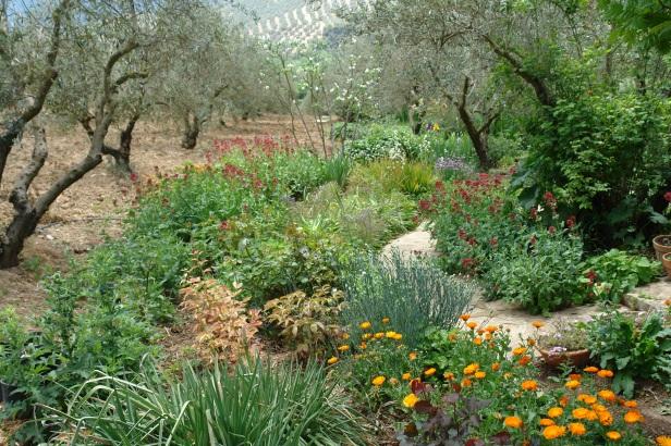 jardin-del-rosario-centranthus-ruber-101