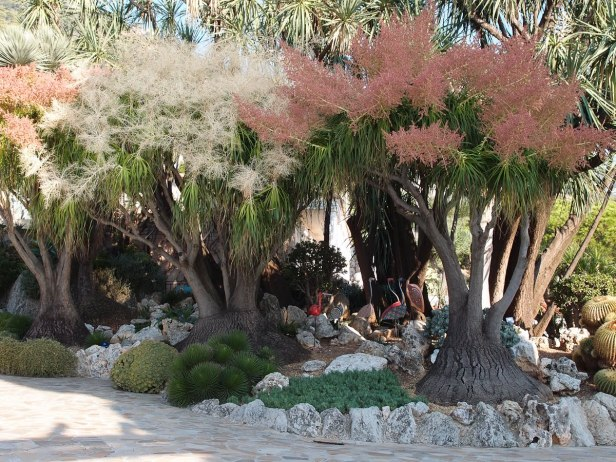 jardin-exotique-de-monaco-3-4
