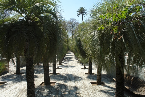 jardines-de-san-telmo-butia-capitata