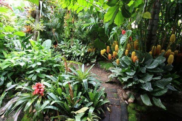 jardines-tropicales-ac