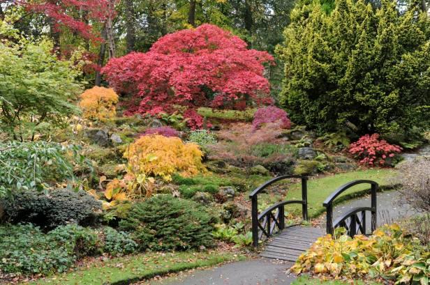 Britain in Bloom - Johnston Gardens in Aberdeen. Picture by COLIN RENNIE October 16, 2014.