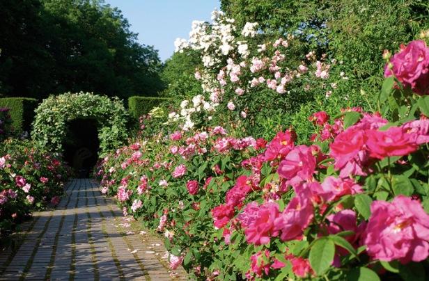 kiftsgate-court-garden-kert