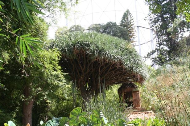 orto-botanico-di-palermo-_dracaena
