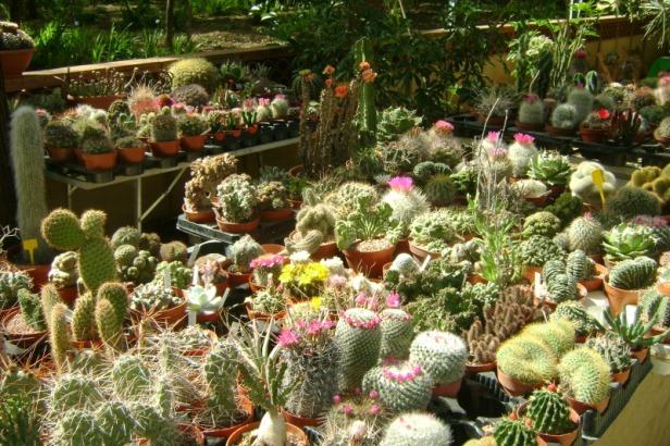 orto-botanico-di-palermo-mb