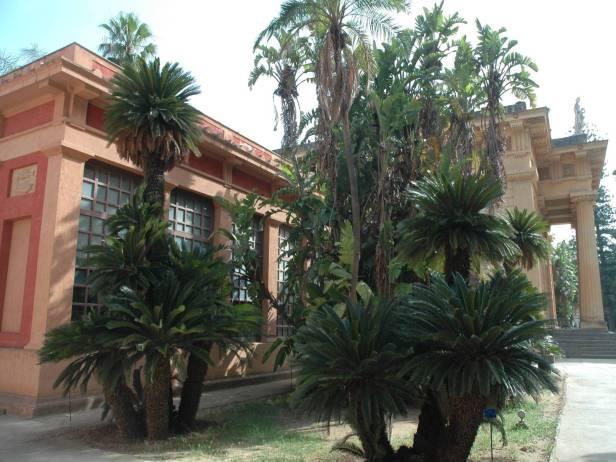 orto-botanico-di-palermo-cyca-revoluta