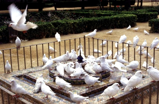 parque-de-maria-luisa-glorieta-de-las-palomas
