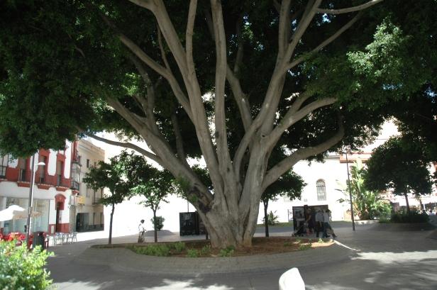 plaza-de-la-encarnacion