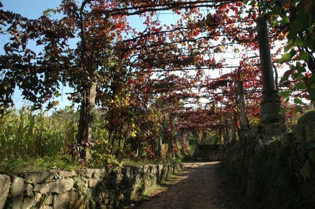 portugal-monasterio-de-tibaes-3