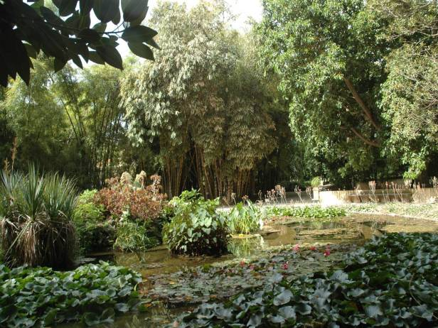 sicilia-orto-botanico-di-palermo-alocasia