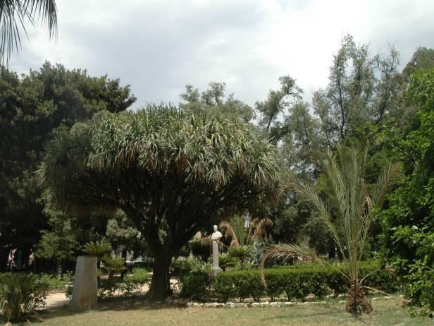 sicilia-palermo-parque-garibaldi-dracaena-drago