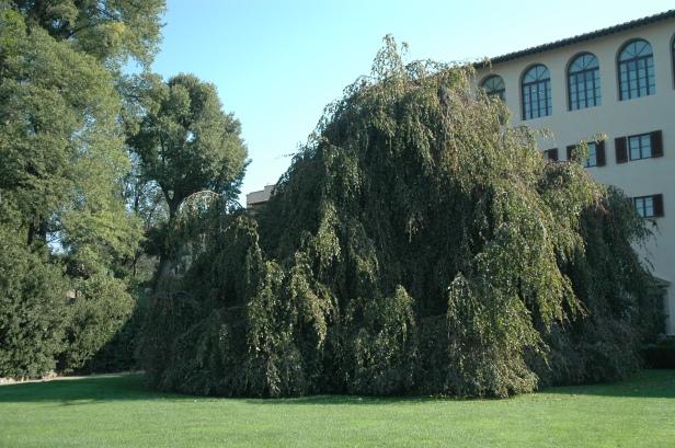 toscana-jardin-de-lla-gherasdesca-495