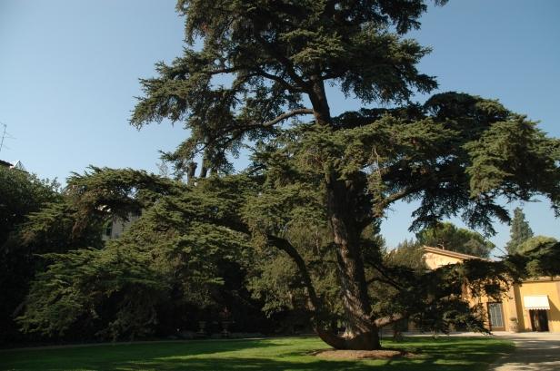 toscana-jardin-de-lla-gherasdesca-504