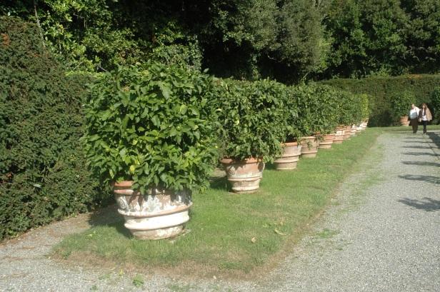 toscana-villa-reale-di-marlia-057
