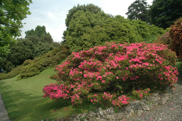 villa-melzi-rododendrons-2