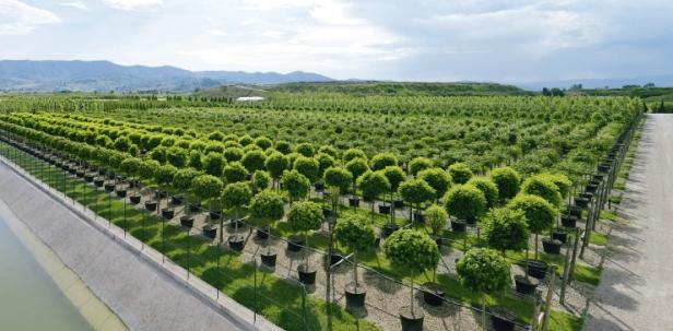 vivero-italiano-piante1