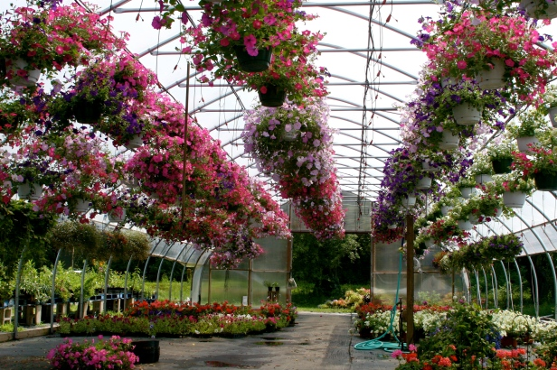 viveros-blooming_garden_center