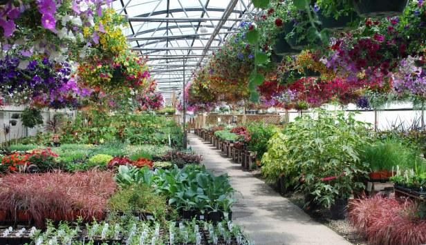 viveros-garden-centerretailplants1