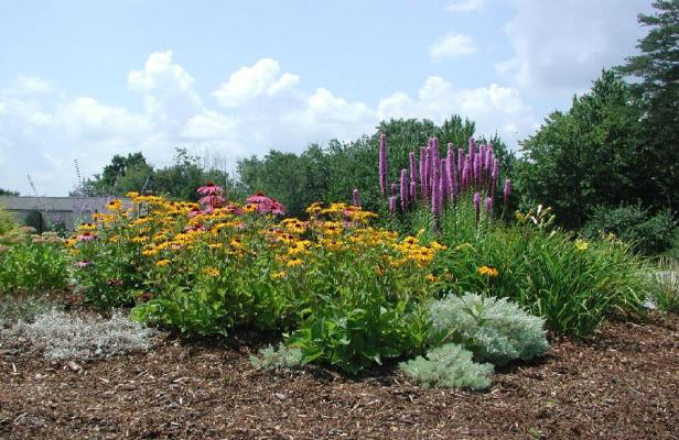 xeriscape-gardens