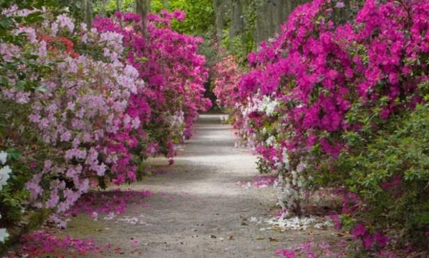 barroco-magnolia-gardens