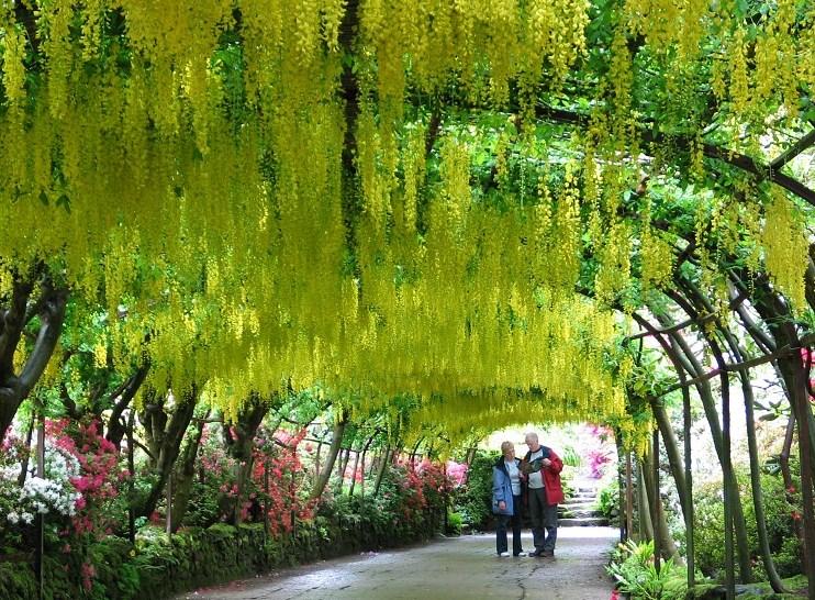 Visita de jardines en Inglaterra.-Londres – Jardines sin fronteras