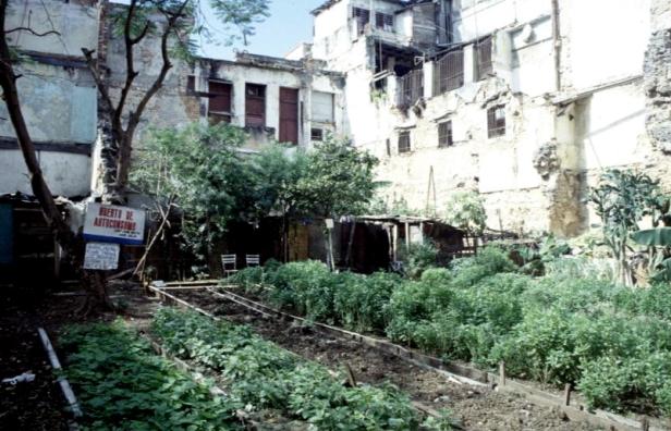 cuba-habana-vieja-huerto