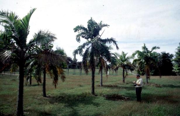 cuba-la-habana-jardin-botanico-jose-manuel