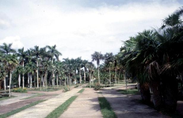cuba-la-habana-jardin-botanico-kn