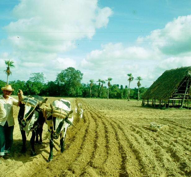 cuba-labrando-la-tierra-2001