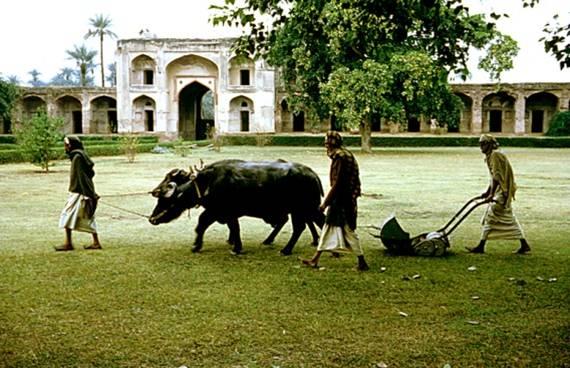 historia-mantenimiento-sostenible-de-siega-del-cesped-en-buffalo