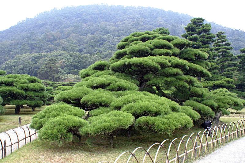 Capitulo v elementos del jard n japon s jardines sin for Decoracion jardin japones