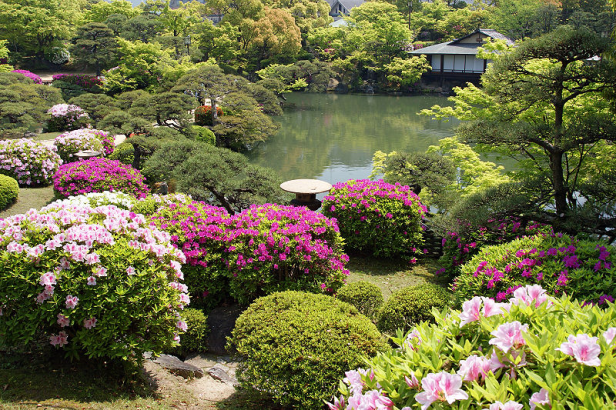 japon-elementos-sorakuen-azaleas-en-soraku-en-garden
