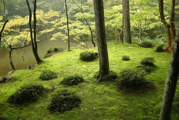 japon-saiho-ji-kyoto-tambien-conocido-como-el-jardin-del-musgo-iniciado-en-1339