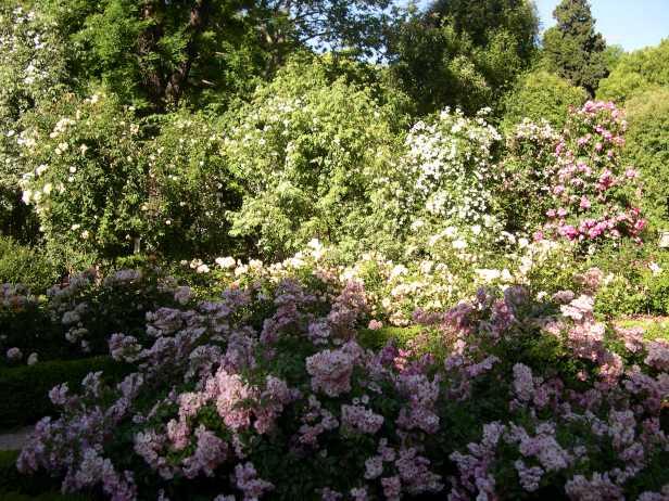 jardin-botanico-rosales