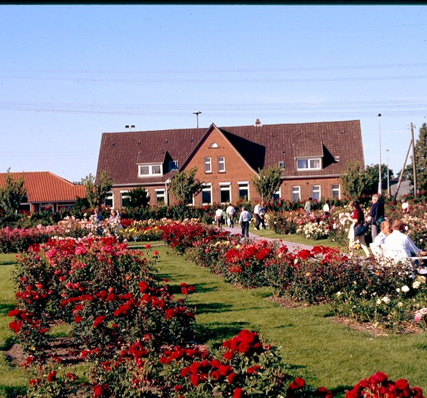 kordes-roses